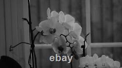 Leica Leitz Elmar-M 90mm f4 Collapsible + Hood